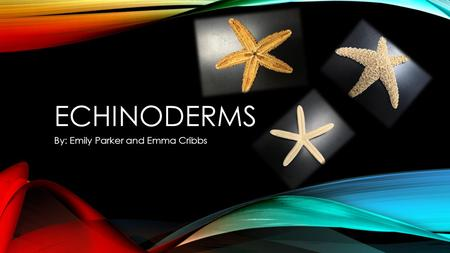 ECHINODERMS By: Emily Parker and Emma Cribbs. WHAT IS AN ECHINODERM? Echinoderms are invertebrates that have radial symmetry, a spiny skin, a water vascular.