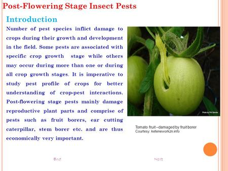 Post-Flowering Stage Insect Pests Introduction Number of pest species inflict damage to crops during their growth and development in the field. Some pests.