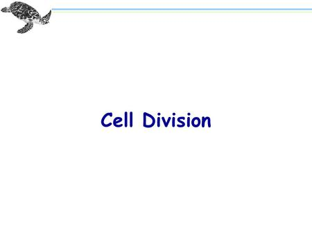 "Cell Division. Paired ""threads"" Figure 8.1 An Early View of Mitosis."