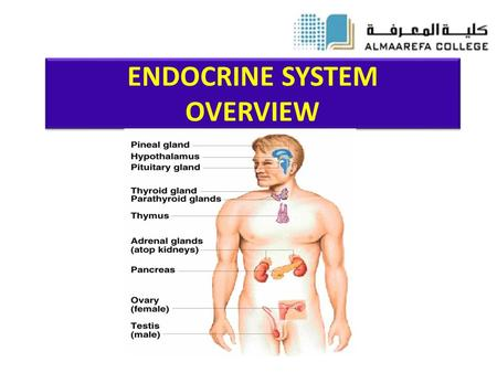 ENDOCRINE SYSTEM OVERVIEW. Objectives Understanding the common aspects of neural and endocrinal regulations. Describing the chemical nature of hormones.