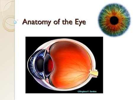 Anatomy of the Eye. Introduction The eye is a specialized sense organ that helps us to understand our environment. It is a sensory unit composed of three.
