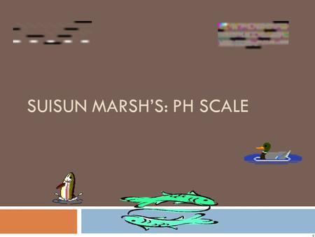 SUISUN MARSH'S: PH SCALE How Can We Protect Our Environment?  We can protect our environment by not littering and not polluting our air or water. 