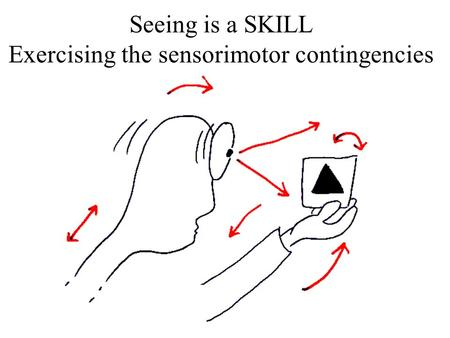 Seeing is a SKILL Exercising the sensorimotor contingencies.