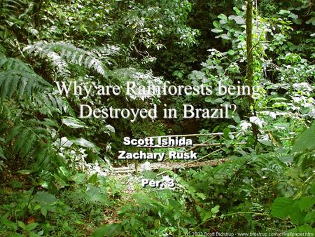 Why are Rainforests being Destroyed in Brazil Why are Rainforests being Destroyed in Brazil? Scott Ishida Zachary Rusk Per. 3 Scott Ishida Zachary Rusk.