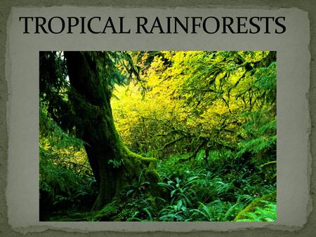The temperature is 26ºc in tropical rainforests. In tropical rainforests the temperature rarely gets higher that 93ºf.