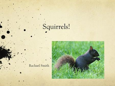 Squirrels! Rachael Smith Appearance One of the most common squirrel species that lives in North America is the red squirrel. There are many different.