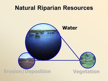 Natural Riparian Resources Erosion/Deposition Water Vegetation.