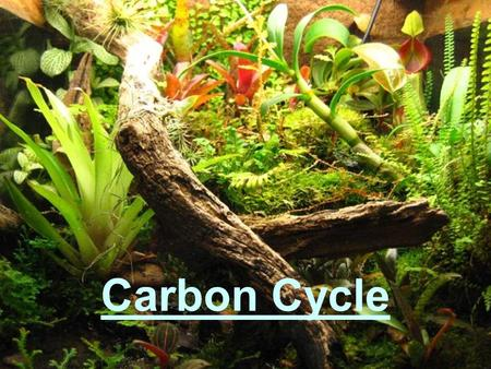 Carbon Cycle. What is the Carbon Cycle? In the carbon cycle, carbon is transferred from inside the Earth to the atmosphere, oceans, crust, and to living.
