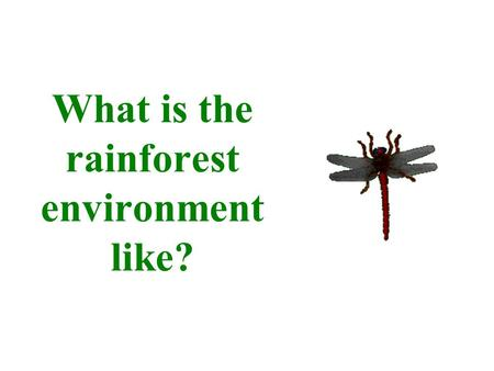 What is the rainforest environment like?. Rainforests.