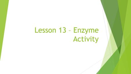 Lesson 13 – Enzyme Activity