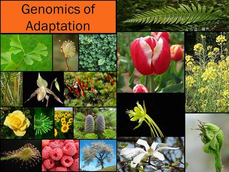 Genomics of Adaptation. Questions What are the genetic changes that underlie adaptation? What are the population genetic or genomic signatures of adaptation?