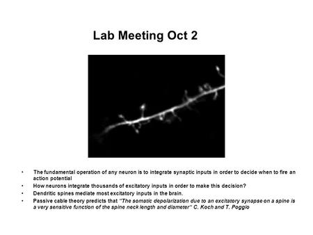 Lab Meeting Oct 2 The fundamental operation of any neuron is to integrate synaptic inputs in order to decide when to fire an action potential How neurons.