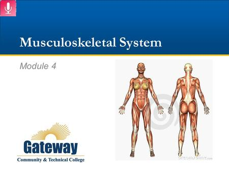 Musculoskeletal System Module 4. SKELETAL SYSTEM Part 1 of 2.