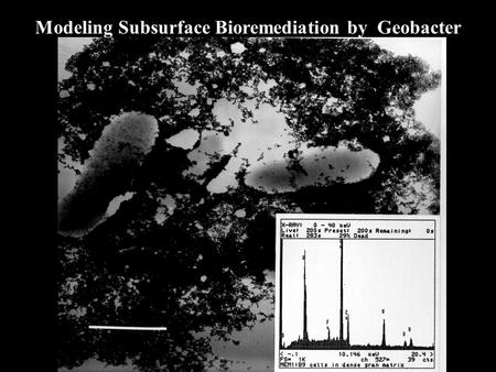 Modeling Subsurface Bioremediation by Geobacter. Geo bacter AcetateCarbon Dioxide U(VI) U(IV) e Uranium Contamination Removal Documented: Groundwaters.