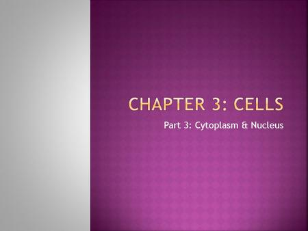 Part 3: Cytoplasm & Nucleus. Cells 8) Describe briefly the process of DNA replication and of mitosis. Explain the importance of mitotic cell division.