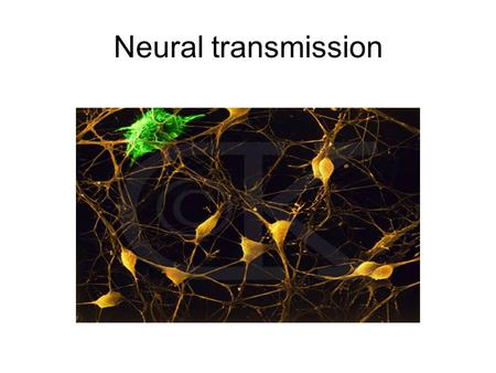 Neural transmission. The Reticular theory vs the Synaptic theory.