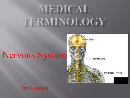 Nervous System Dr.Hannah.  The nervous system is a very complex system in the body.  The nervous system is the body's information gatherer, storage.