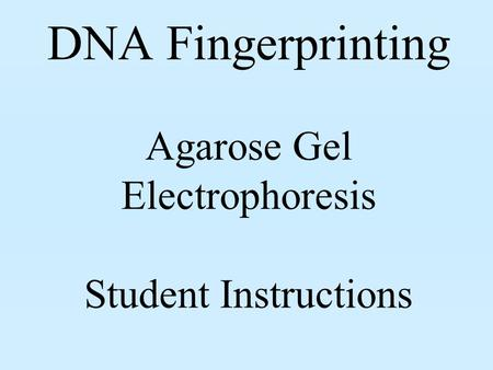 DNA Fingerprinting Agarose Gel Electrophoresis Student Instructions.