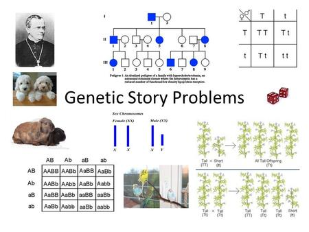 Genetic Story Problems. Steps for Genetic Problems 1. Identify trait(s)… Dominant (A) and recessive (a) 2. Parents- phenotype and genotype 3. Punnett.