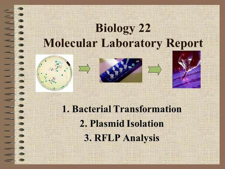 Biology 22 Molecular Laboratory Report 1. Bacterial Transformation 2. Plasmid Isolation 3. RFLP Analysis.