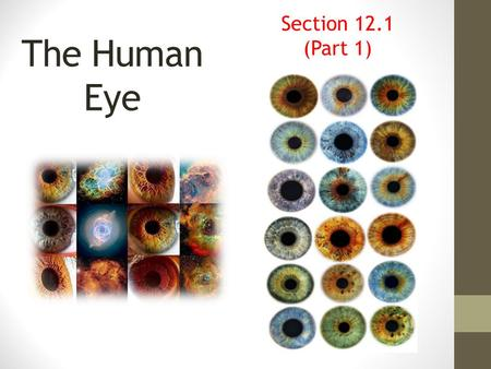 Section 12.1 (Part 1) The Human Eye.