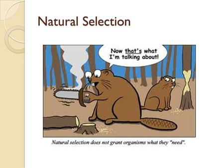 Natural Selection Factors Evolution