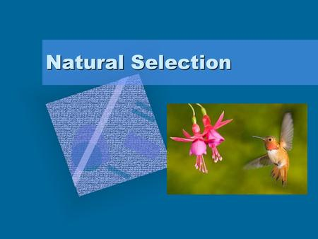 Natural Selection. Natural Selection – the processes by which individuals with favorable traits survive and reproduce, passing their traits on to the.