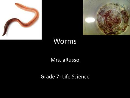 Worms Mrs. aRusso Grade 7- Life Science. General Characteristics of Worms Slender, legless invertebrates Have organs (digestive, reproductive, etc.) Show.