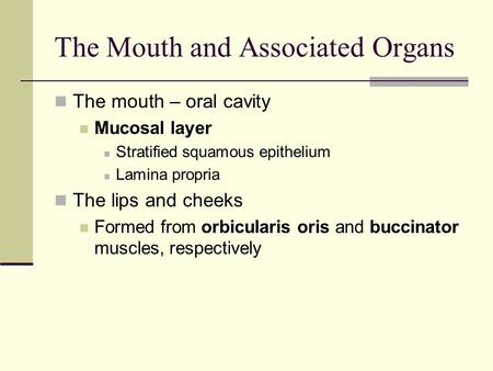 The Mouth and Associated Organs The mouth – oral cavity Mucosal layer Stratified squamous epithelium Lamina propria The lips and cheeks Formed from orbicularis.