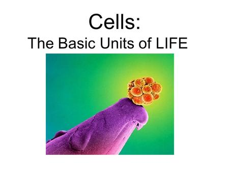 Cells: The Basic Units of LIFE. Early Discoveries of Life The first person to study nature under a microscope was Anton Van Leeuwenhoek Robert Hooke.