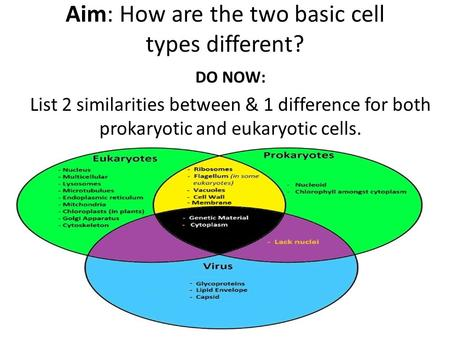 Aim: How are the two basic cell types different? DO NOW: List 2 similarities between & 1 difference for both prokaryotic and eukaryotic cells.