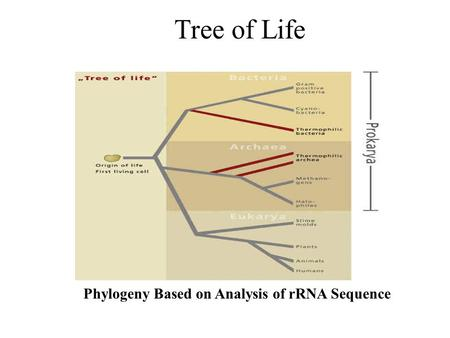 Tree of Life Phylogeny Based on Analysis of rRNA Sequence.