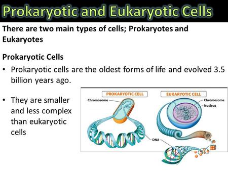 There are two main types of cells; Prokaryotes and Eukaryotes Prokaryotic Cells Prokaryotic cells are the oldest forms of life and evolved 3.5 billion.