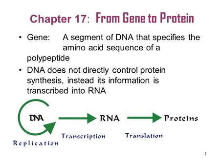Chapter 17: From Gene to Protein
