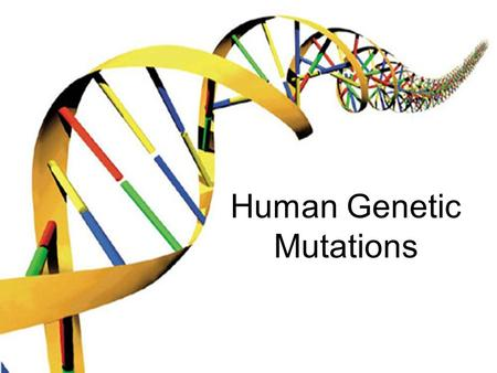 Human Genetic Mutations. 2 Main Types of Mutations 1.) Chromosomal Mutations 2.) Gene Mutations.