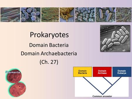 Domain Bacteria Domain Archaebacteria (Ch. 27)