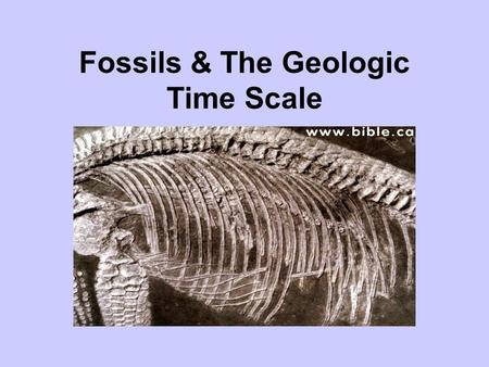 Fossils & The Geologic Time Scale. What animal are the bones? Piece the bones together. Bonus for correct answers.