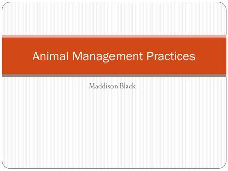 Maddison Black Animal Management Practices. References Williams, Jane. The Complete Textbook of Animal Health and Welfare. Edinburgh: Saunders/Elsevier,