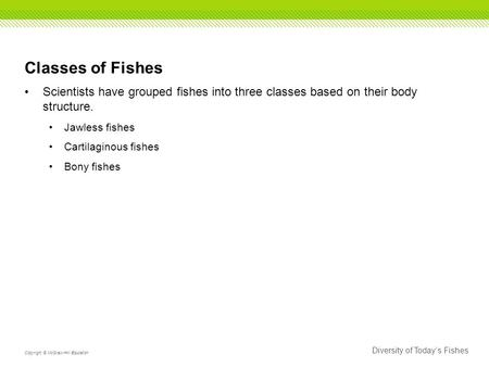 Diversity of Today's Fishes Copyright © McGraw-Hill Education Classes of Fishes Scientists have grouped fishes into three classes based on their body structure.