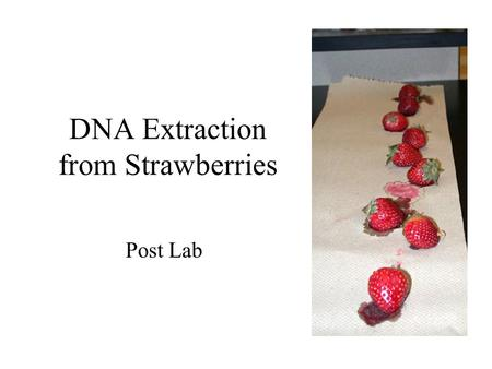 DNA Extraction from Strawberries Post Lab Protocol: Step by Step What was the purpose of Mashing the Berries? –physically break apart the tissues and.