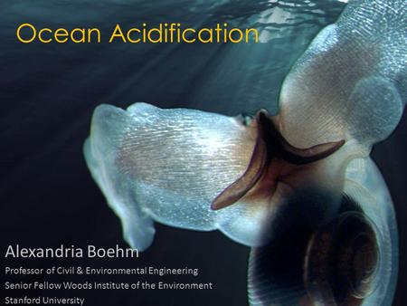 Ocean Acidification Alexandria Boehm Professor of Civil & Environmental Engineering Senior Fellow Woods Institute of the Environment Stanford University.