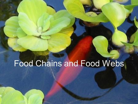 Food Chains and Food Webs. A food chain shows how each living thing gets its food. Plants are called producers because they are able to use light energy.