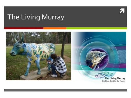  The Living Murray. What is The Living Murray?  The Living Murray is one of Australia's most significant river restoration programs. It aims to improve.