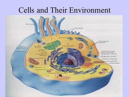 Cells and Their Environment Chapter 4 p 74-84. Homeostasis A biological balance Cells, tissues, organs, and organisms must maintain a balance. Cells do.