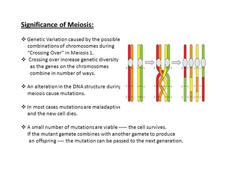 "Significance of Meiosis:  Genetic Variation caused by the possible combinations of chromosomes during ""Crossing Over"" in Meiosis 1.  Crossing over increase."