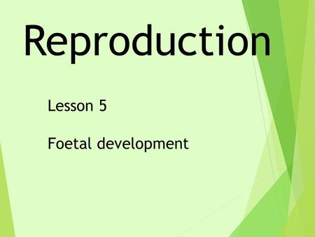 Reproduction Lesson 5 Foetal development. 1Fertilisation is when an egg cell joins with: Aanother egg cell. Ba sperm cell. Ca body cell. Droot hair cells.