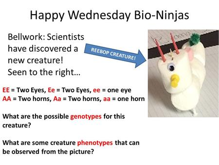 Happy Wednesday Bio-Ninjas Bellwork: Scientists have discovered a new creature! Seen to the right… REEBOP CREATURE! EE = Two Eyes, Ee = Two Eyes, ee =