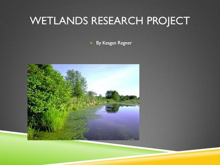 WETLANDS RESEARCH PROJECT  By Keagan Regner. What is a Wetland?  A wetland is where land and water meet and where almost 300 species of wildlife live.