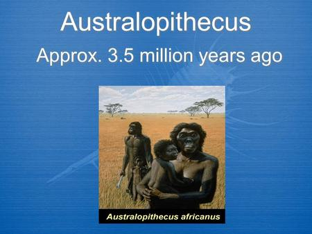 Australopithecus Approx. 3.5 million years ago. Stats  Males 4.5 - 5 ft. tall  Females 3 ft tall  Brain less that 500 cc  Very large jaws  50-75.