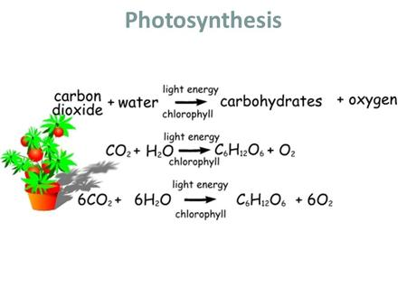 Photosynthesis. Pigments of Photosynthesis Pigments are molecules that absorb specific wavelengths (energies) of light and reflect all others. Chlorophyll.